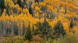 Autumn in Vail Colorado