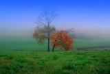 Foggy Meadows
