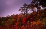 Misty Shrouded Autumn