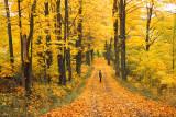 Backroad Autumn