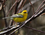 Birdtrips to Azores 2011-2016