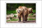 2008 - Toronto Zoo, Ontario - Canada