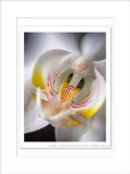 2014 - Orchid (Macro Lens Baby)
