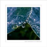 2014 - Dew Drops, Edwards Garden - Toronto, Ontario - Canada