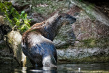 2015 - Otter - Toronto Zoo, Ontario - Canada