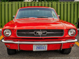 2015 - Ford Mustang, Rouge Valley Cruisers - Toronto, Ontario - Canada