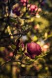 2016  - Universaty of Coimbra Botanic Garden, Coimbra - Portugal