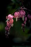 2015 - Rosetta McClain Garden - Toronto, Ontario - Canada