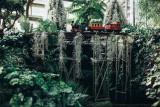 2016 - Allan Gardens - Toronto, Ontario - Canada