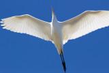 FAVOURITE BIRDS - Mina egna favoriter