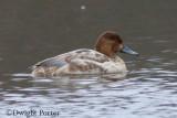 Duck ID