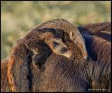 anteater baby2.jpg