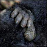gorilla pedicure needed.jpg
