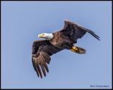 eagle .jpg