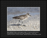 beach_bird_id_photos