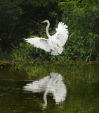 Bitterns, Herons, Egrets, Storks, Ibis, and Other Wading Birds