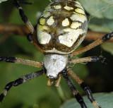 Female, head detail