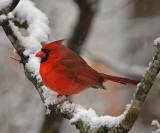 Wintertime Scenes and Backyard Bird Videos