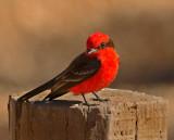Birding Texas: Southwest and Coastal Regions - January 2014