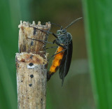 March Flies and Fungus Gnats
