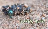 Tumblebug Video