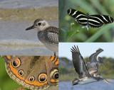 Apalachicola Bay Wildlife Video