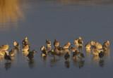 Avian Sunset