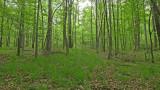 VIDEO:  Wildlife of Moore's Mill Creek (Part 2)