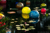 chihuly_at_fairchild_2015