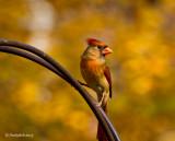 Cardinal December 4