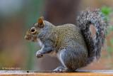 Squirrel December 9