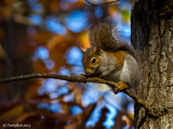 Squirrel December 17