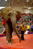Circus Elephant March 9