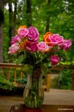 Roses May 12