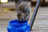 Brave Squirrel February 28