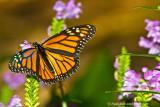 Monarch October 2