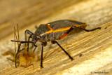 Bug Close-UP October 6