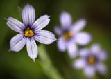 Field Wild Flowers 1.jpg