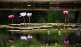 Brookgreen Gardens 1.jpg