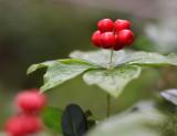 Berries 1.jpg