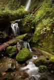 Quinault Rainforest 2.jpg