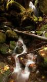 Quinault Rainforest 3.jpg