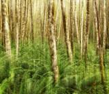 Quinault Rainforest 4.jpg