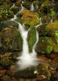 Quinault Rainforest 6.jpg