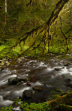 Sol Duc Falls 6.jpg