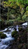 Wahkeena Creek 1.jpg