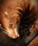 Sea Lion 1.jpg