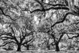 Brookgreen Gardens 4 bw.jpg