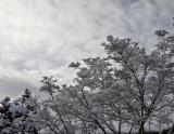 3.  February snow at Medford Leas.