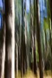 48.  Blurred pine trees.